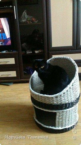 Давно хотела сплести кошки домик, на просторах интернета, очень много вариантов, а я придумала свой. Домик 2 в 1. Очень удобный для кошечек с котятами и не только.  фото 1