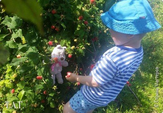 На дворе вторая половина августа.  Поспевает малина...  фото 14