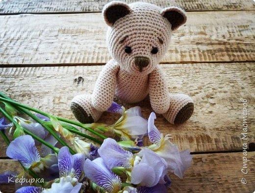 Медведей много не бывает) фото 2