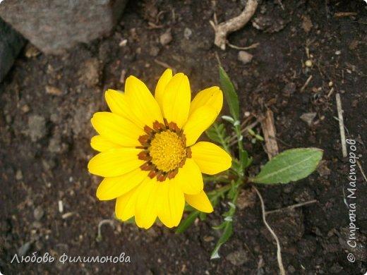 Как не печально, но до конца лета осталось чуть меньше двух недель. Уже второй год оно не радует наш край теплом, часто шли дожди. Но все равно так жаль с ним расставаться. Я хочу пригласить вас в гости, прогуляться по моему саду, полюбоваться цветами. Королева сада - роза, самый узнаваемый и любимый цветок. фото 42