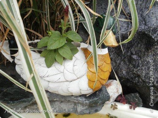 Как не печально, но до конца лета осталось чуть меньше двух недель. Уже второй год оно не радует наш край теплом, часто шли дожди. Но все равно так жаль с ним расставаться. Я хочу пригласить вас в гости, прогуляться по моему саду, полюбоваться цветами. Королева сада - роза, самый узнаваемый и любимый цветок. фото 41