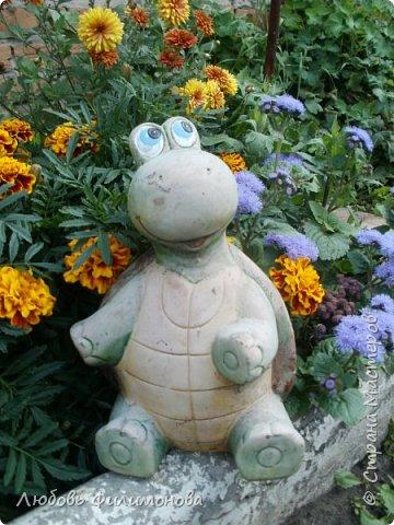 Как не печально, но до конца лета осталось чуть меньше двух недель. Уже второй год оно не радует наш край теплом, часто шли дожди. Но все равно так жаль с ним расставаться. Я хочу пригласить вас в гости, прогуляться по моему саду, полюбоваться цветами. Королева сада - роза, самый узнаваемый и любимый цветок. фото 44