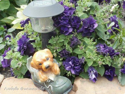 Как не печально, но до конца лета осталось чуть меньше двух недель. Уже второй год оно не радует наш край теплом, часто шли дожди. Но все равно так жаль с ним расставаться. Я хочу пригласить вас в гости, прогуляться по моему саду, полюбоваться цветами. Королева сада - роза, самый узнаваемый и любимый цветок. фото 27