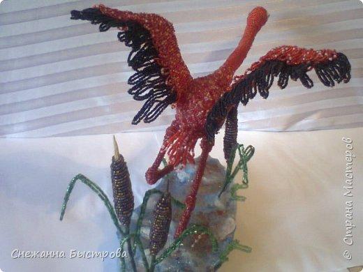 взлетающий красный фламинго фото 2