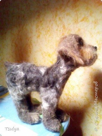 Всем привет! Недавно открыла для себя замечательную породу собак -дратхаар. Раньше как-то не видела их. И захотелось, конечно, свалять такого песика. Собака выполнена методом сухого валяния без каркаса. Нос и глаза из пластика. фото 4