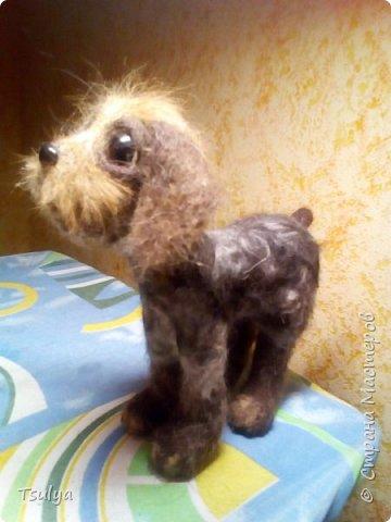 Всем привет! Недавно открыла для себя замечательную породу собак -дратхаар. Раньше как-то не видела их. И захотелось, конечно, свалять такого песика. Собака выполнена методом сухого валяния без каркаса. Нос и глаза из пластика. фото 3