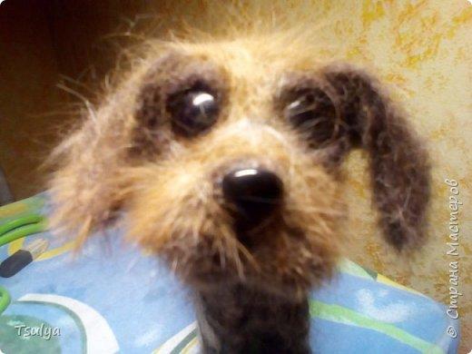 Всем привет! Недавно открыла для себя замечательную породу собак -дратхаар. Раньше как-то не видела их. И захотелось, конечно, свалять такого песика. Собака выполнена методом сухого валяния без каркаса. Нос и глаза из пластика. фото 1