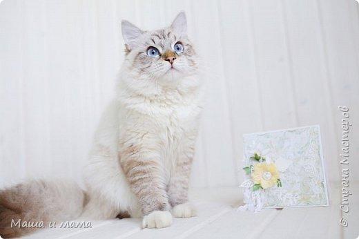 И снова здравствуйте!!!!  Еще одна открыточка. Вдохновлялась у Lady E  http://scrapartbyladye.blogspot.ru/  У меня получилось как-то так фото 7