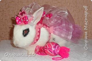 Здравствуйте! Замечательный крольчонок Буся в красивом наряде для фотосессии.   фото 1