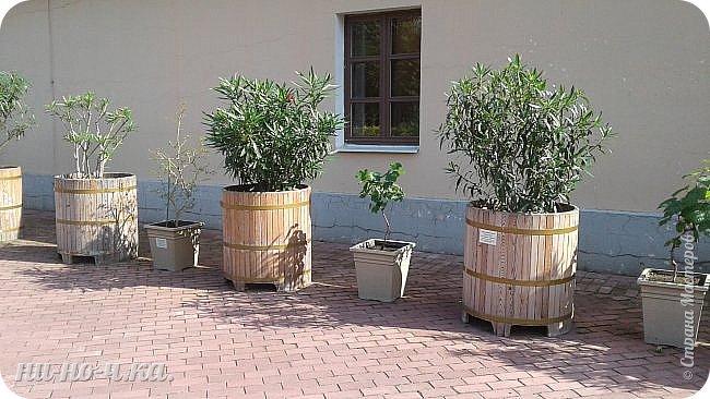 В Царицыно я начала свою экскурсию с оранжерей, их 3 корпуса... Это вид около первого корпуса на улице... фото 1