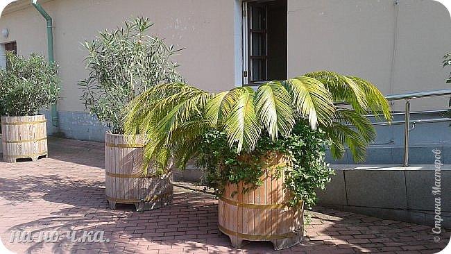 В Царицыно я начала свою экскурсию с оранжерей, их 3 корпуса... Это вид около первого корпуса на улице... фото 2
