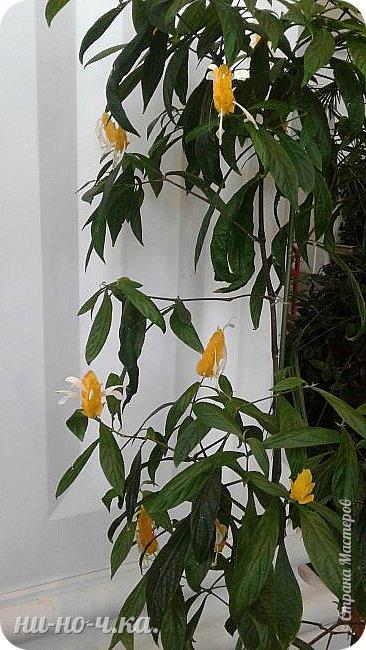 В Царицыно я начала свою экскурсию с оранжерей, их 3 корпуса... Это вид около первого корпуса на улице... фото 17
