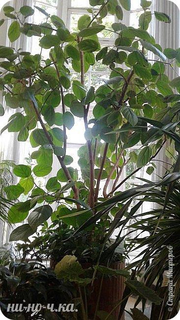 В Царицыно я начала свою экскурсию с оранжерей, их 3 корпуса... Это вид около первого корпуса на улице... фото 22