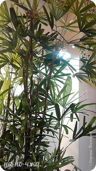 В Царицыно я начала свою экскурсию с оранжерей, их 3 корпуса... Это вид около первого корпуса на улице... фото 23