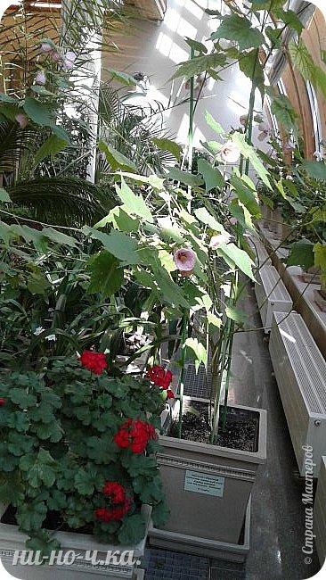 В Царицыно я начала свою экскурсию с оранжерей, их 3 корпуса... Это вид около первого корпуса на улице... фото 27