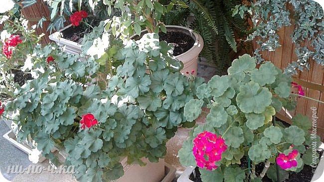 В Царицыно я начала свою экскурсию с оранжерей, их 3 корпуса... Это вид около первого корпуса на улице... фото 28