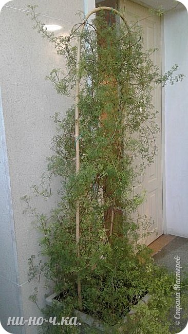 В Царицыно я начала свою экскурсию с оранжерей, их 3 корпуса... Это вид около первого корпуса на улице... фото 33