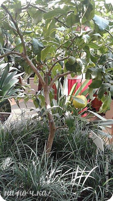 В Царицыно я начала свою экскурсию с оранжерей, их 3 корпуса... Это вид около первого корпуса на улице... фото 36
