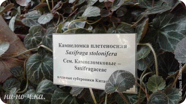В Царицыно я начала свою экскурсию с оранжерей, их 3 корпуса... Это вид около первого корпуса на улице... фото 40