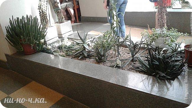 В Царицыно я начала свою экскурсию с оранжерей, их 3 корпуса... Это вид около первого корпуса на улице... фото 41