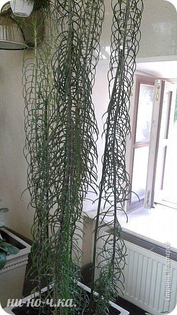 В Царицыно я начала свою экскурсию с оранжерей, их 3 корпуса... Это вид около первого корпуса на улице... фото 45