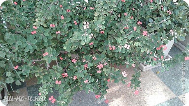 В Царицыно я начала свою экскурсию с оранжерей, их 3 корпуса... Это вид около первого корпуса на улице... фото 50