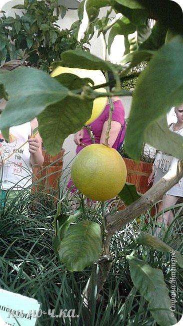 В Царицыно я начала свою экскурсию с оранжерей, их 3 корпуса... Это вид около первого корпуса на улице... фото 56