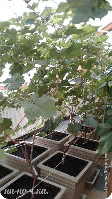 В Царицыно я начала свою экскурсию с оранжерей, их 3 корпуса... Это вид около первого корпуса на улице... фото 57