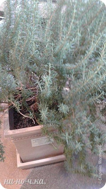 В Царицыно я начала свою экскурсию с оранжерей, их 3 корпуса... Это вид около первого корпуса на улице... фото 59
