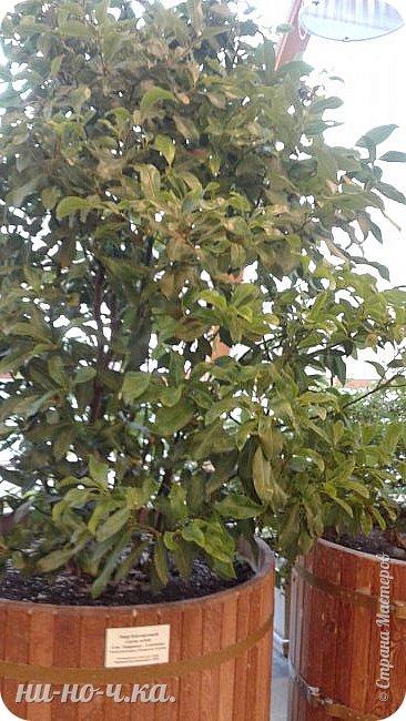 В Царицыно я начала свою экскурсию с оранжерей, их 3 корпуса... Это вид около первого корпуса на улице... фото 66