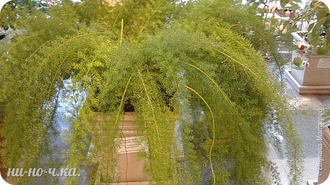 В Царицыно я начала свою экскурсию с оранжерей, их 3 корпуса... Это вид около первого корпуса на улице... фото 69