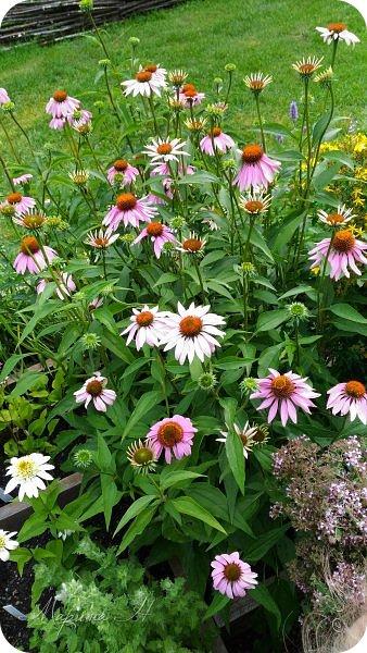 Сегодня приглашаю прогуляться по ботаническому саду, который находится близ села Камлак. В названиях цветов я совсем не сильна, поэтому предлагаю просто полюбоваться фото 1