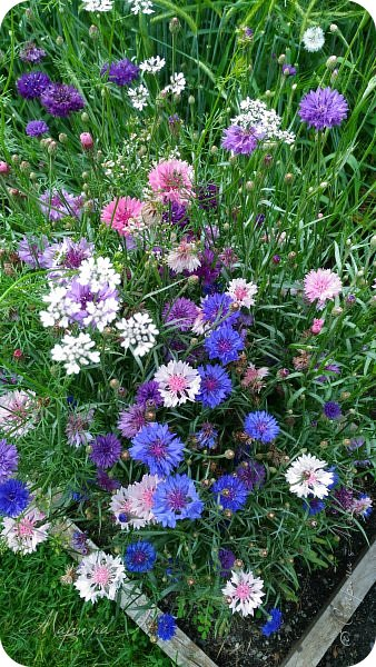 Сегодня приглашаю прогуляться по ботаническому саду, который находится близ села Камлак. В названиях цветов я совсем не сильна, поэтому предлагаю просто полюбоваться фото 2