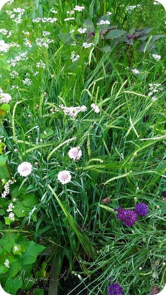 Сегодня приглашаю прогуляться по ботаническому саду, который находится близ села Камлак. В названиях цветов я совсем не сильна, поэтому предлагаю просто полюбоваться фото 3