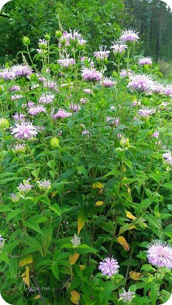 Сегодня приглашаю прогуляться по ботаническому саду, который находится близ села Камлак. В названиях цветов я совсем не сильна, поэтому предлагаю просто полюбоваться фото 4