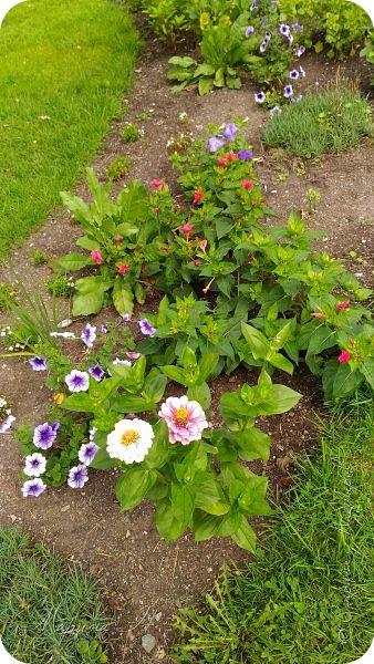 Сегодня приглашаю прогуляться по ботаническому саду, который находится близ села Камлак. В названиях цветов я совсем не сильна, поэтому предлагаю просто полюбоваться фото 6