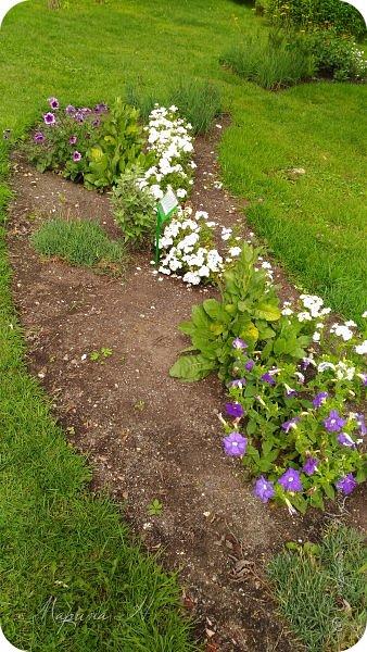 Сегодня приглашаю прогуляться по ботаническому саду, который находится близ села Камлак. В названиях цветов я совсем не сильна, поэтому предлагаю просто полюбоваться фото 7