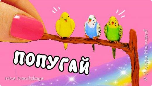 Привет. Сегодня я покажу как сделать миниатюрных попугаем для кукольного домика.  Для работы вам понадобится: - полимерная глина ванильного цвета (или белого) - инструменты - акриловая краска зеленого, голубого, желтого, коричневого и черного цвета