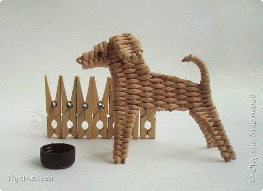 Вот ещё одна собачка, полное имя Плетёша, но дома кличут просто Тёшей.
