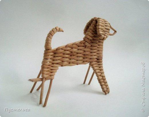 Вот ещё одна собачка, полное имя Плетёша, но дома кличут просто Тёшей.  фото 12