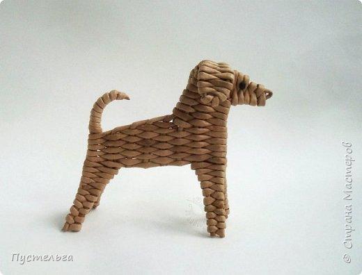 Вот ещё одна собачка, полное имя Плетёша, но дома кличут просто Тёшей.  фото 13