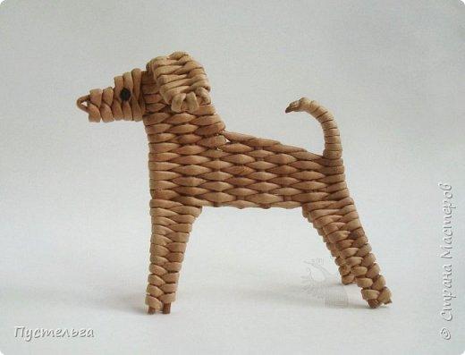 Вот ещё одна собачка, полное имя Плетёша, но дома кличут просто Тёшей.  фото 14
