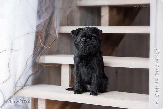 Хочу показать свою собаку породы Бельгийский гриффон и фотографии моей дочери, который она сделала в необычном стиле. Кире так подошли крылья и оформление, что получилось сказочно красиво.  фото 8