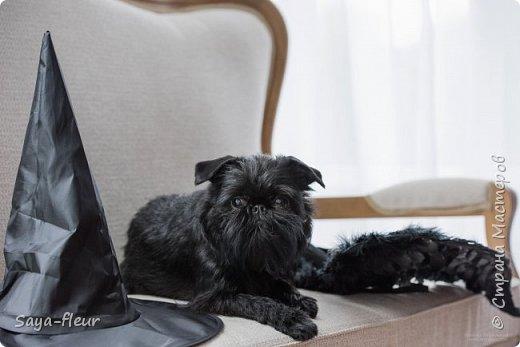 Хочу показать свою собаку породы Бельгийский гриффон и фотографии моей дочери, который она сделала в необычном стиле. Кире так подошли крылья и оформление, что получилось сказочно красиво.  фото 9