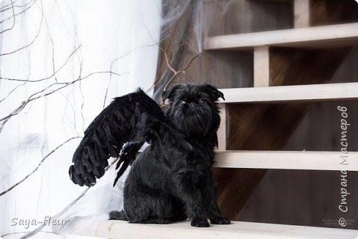 Хочу показать свою собаку породы Бельгийский гриффон и фотографии моей дочери, который она сделала в необычном стиле. Кире так подошли крылья и оформление, что получилось сказочно красиво.  фото 10