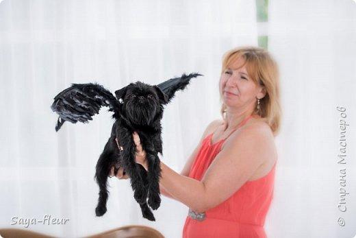 Хочу показать свою собаку породы Бельгийский гриффон и фотографии моей дочери, который она сделала в необычном стиле. Кире так подошли крылья и оформление, что получилось сказочно красиво.  фото 12