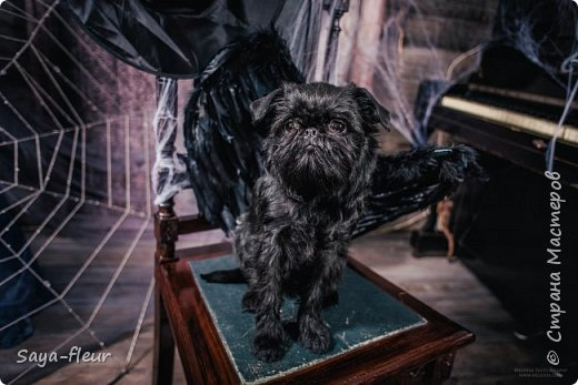 Хочу показать свою собаку породы Бельгийский гриффон и фотографии моей дочери, который она сделала в необычном стиле. Кире так подошли крылья и оформление, что получилось сказочно красиво.  фото 4
