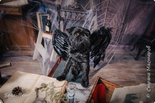 Хочу показать свою собаку породы Бельгийский гриффон и фотографии моей дочери, который она сделала в необычном стиле. Кире так подошли крылья и оформление, что получилось сказочно красиво.  фото 5