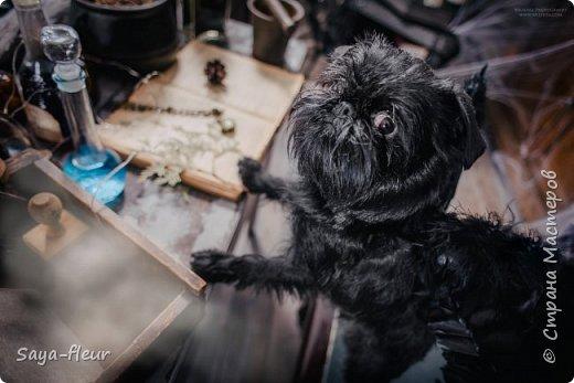 Хочу показать свою собаку породы Бельгийский гриффон и фотографии моей дочери, который она сделала в необычном стиле. Кире так подошли крылья и оформление, что получилось сказочно красиво.  фото 7