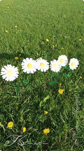 Вот такие цветы получились из обычных пластиковых бутылок.  фото 5